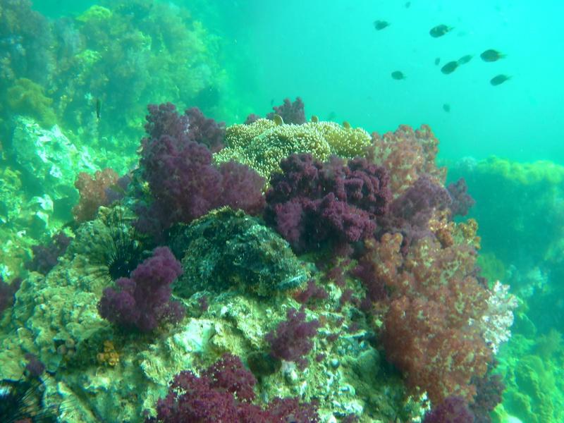 ทริปดำน้ำดูปะการัง เกาะหลีเป๊ะ อาดัง-ราวี